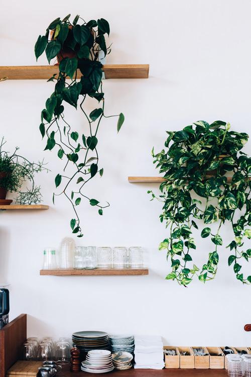 Arc- Pot Plants